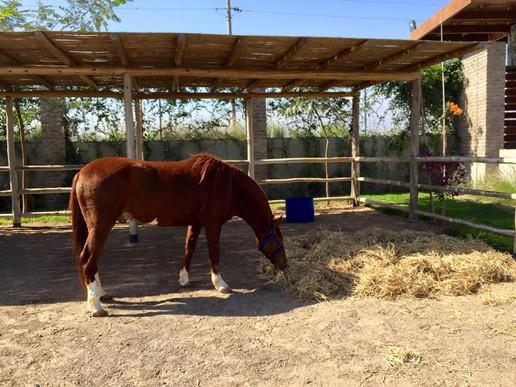 1000m2 destinados al albergue y cuidado de caballos