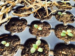 Enséñale a tus hijos a amar la naturaleza. Comparten con ellos la magia de ver germinar una semilla.