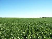 Quilmaná es un valle predominantemente agrícola, Fundo Alborada está rodeado de sembríos de paltos, cítricos, maizales, entre otros