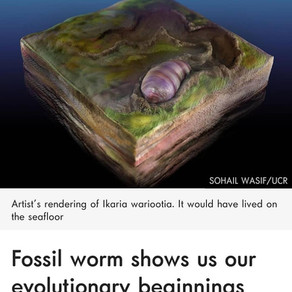 Yes, This Worm-Like Creature is Your Ancestor.