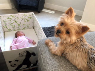Introducing Children & Dogs