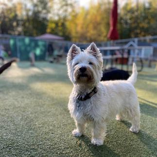 Barkers Pet Motel Best Dog Boarding Daycare St. Albert Edmonton Grooming