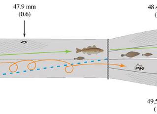 Investigación sobre selectividad de artes: mejora de la selectividad en la pesquería de cigala en ag