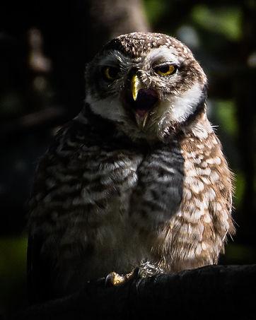 image4-wildlife_edited.jpg