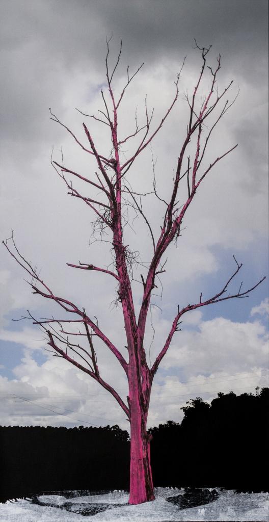 Sobre árvores mortas e árv. secas