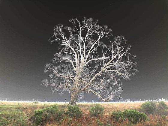 Árvore X