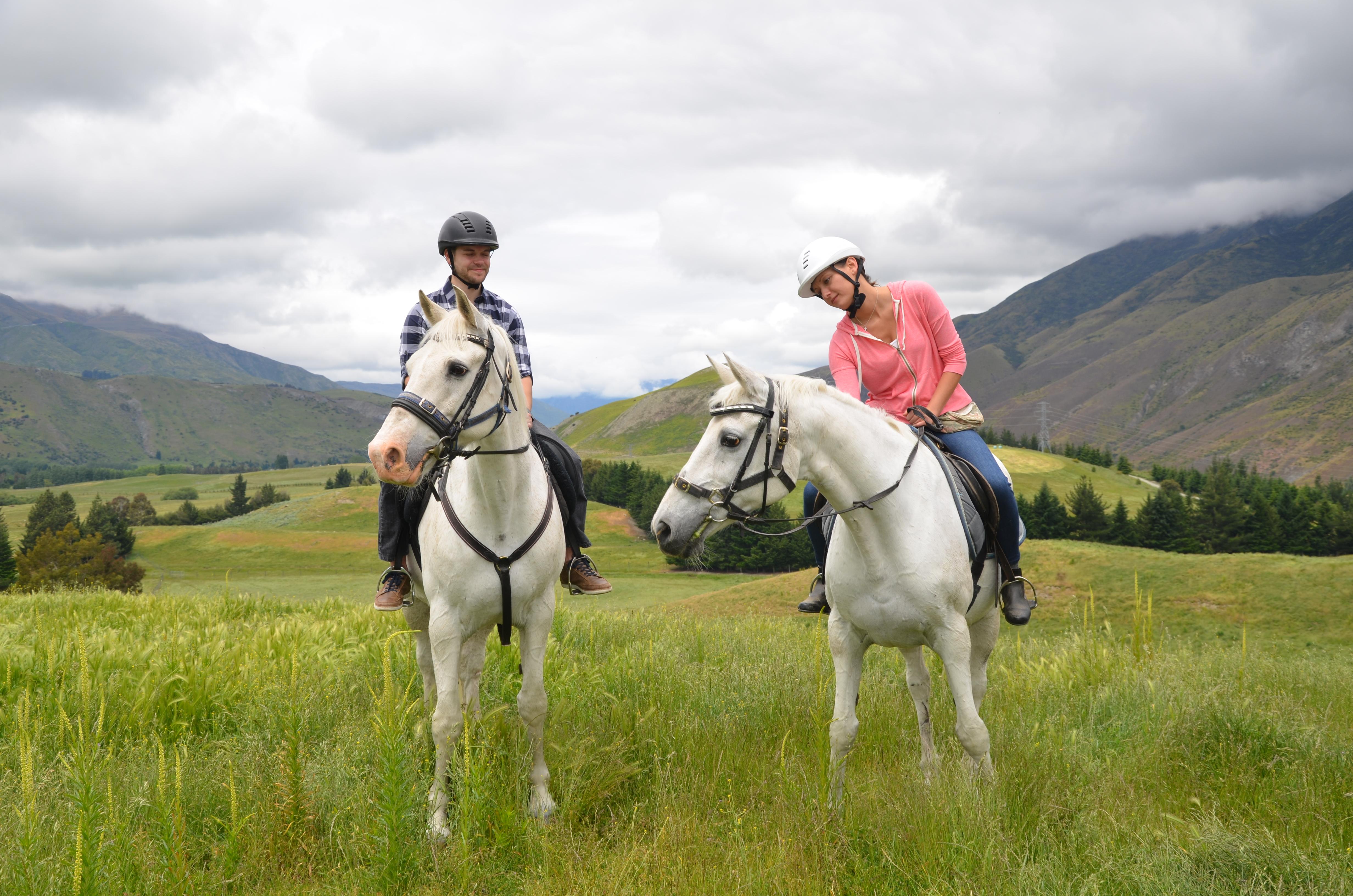 White horses in spring