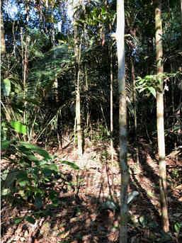 Floresta de Manejo Sustentável