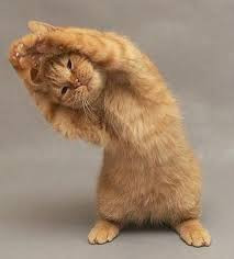 It's hump day... Namaste