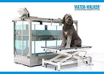 water-walter_web.jpg