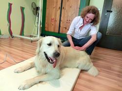 Hund bei der Physiotherapie