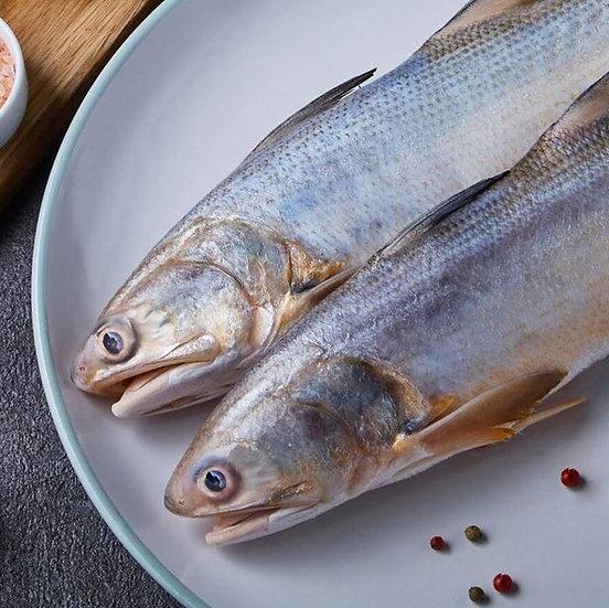 根島野生海午仔魚