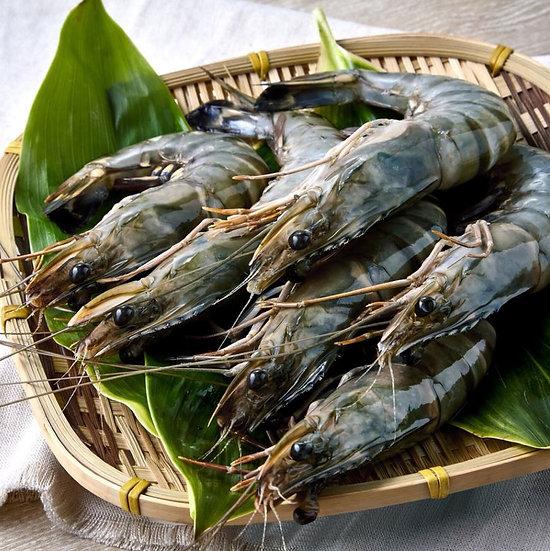 根島生態蝦(30cm)