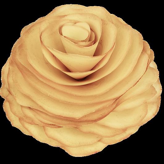Flor de Madeira, Flores de Madeira, Rosa de Madeira