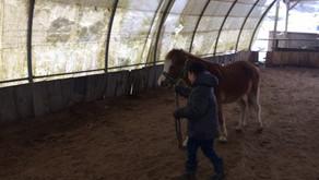 Sortie au poney-club :