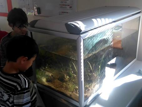 Un aquarium dans la classe !