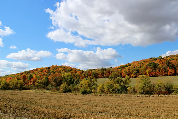 Countryside during Fall