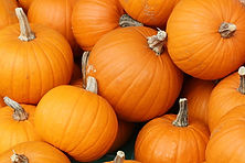 Pumpkins In Toronto.jpg