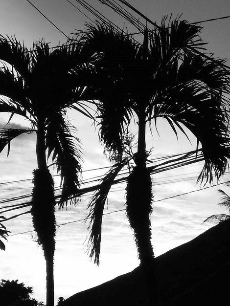 Palmen Skyline