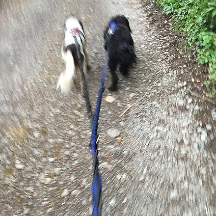 Not often I get the chance to double up and make hills that little bit easier! #canicross #dogs #run