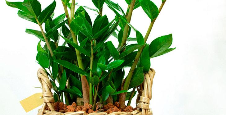 Diverses plantes vertes