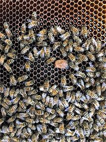 Katja Tausig - beekeeping