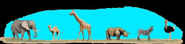 animal-divider.png