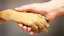 dog paw facts.jpeg.653x0_q80_crop-smart.