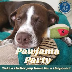 pawjama party.webp