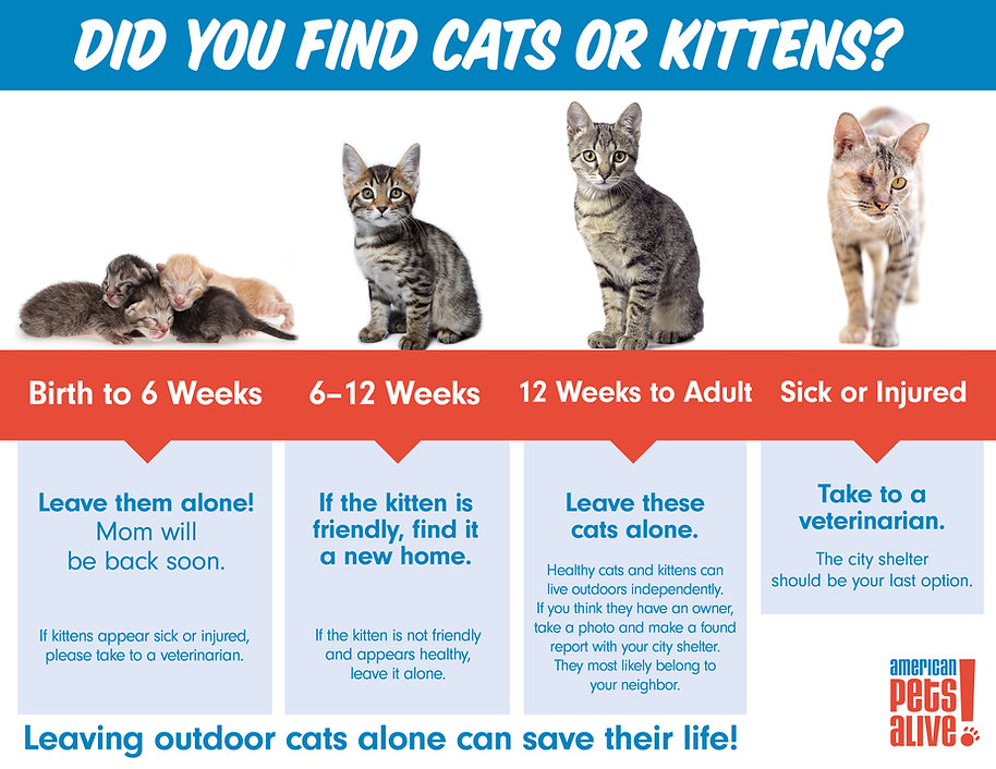 20-Apr-WhatToDo-Cats-Infographic.jpg