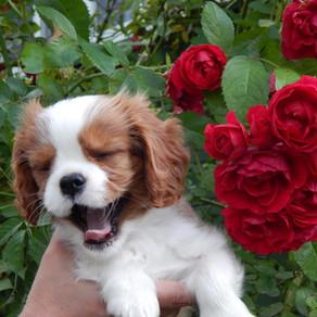 В каком возрасте лучше брать щенка?!