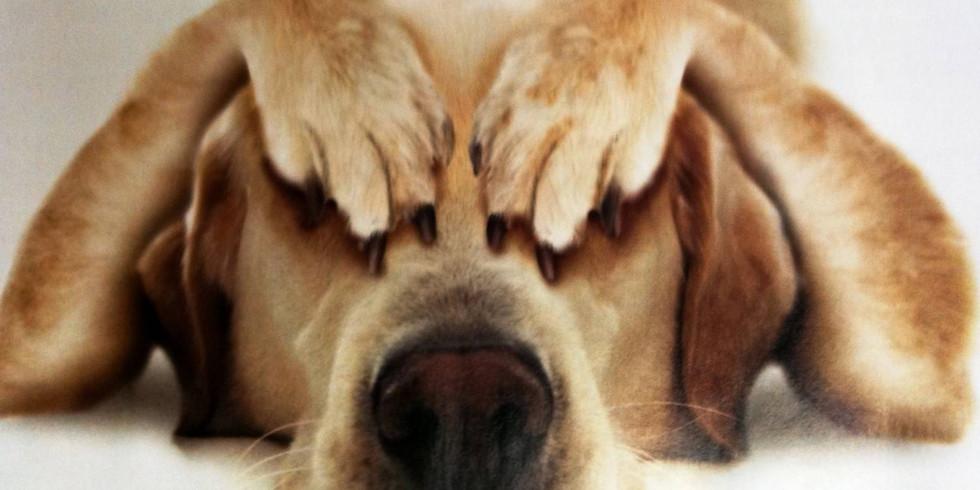 Лекция Юлии Соколовой. Чего боится собака? Как сделать мир собаки спокойным?
