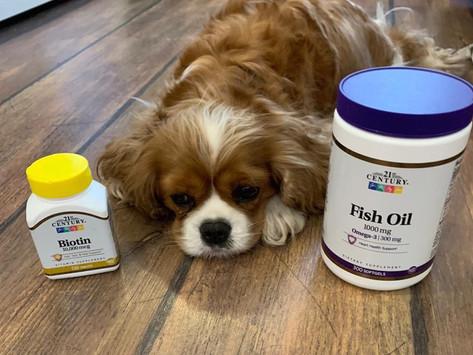 Нужно ли давать собаке витамины?