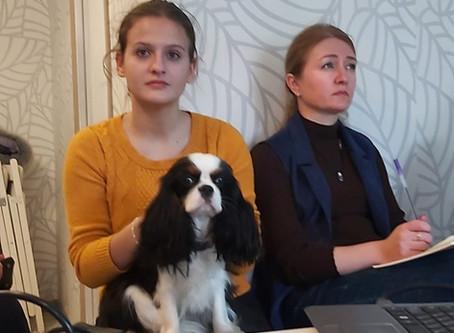 Социальная организация собачьей стаи