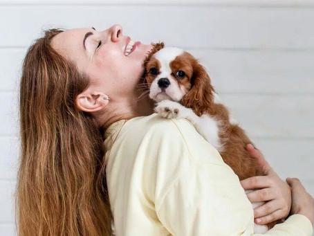Зачем собака лижет лицо, ноги, и руки?