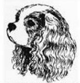 Правильная голова ККЧС - профиль
