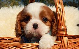 Как правильно выбирать щенка