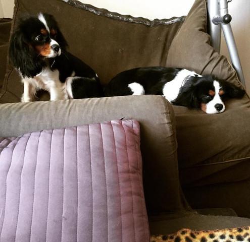 Лина и Чарли делят подушки