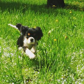 Обучение маленьких собачек. Глава 4