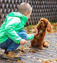 Ребенок - не маленький взрослый, щенок - не маленькая собака. Часть 3