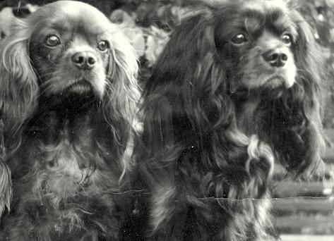 Фото из архива А.И. Полякова