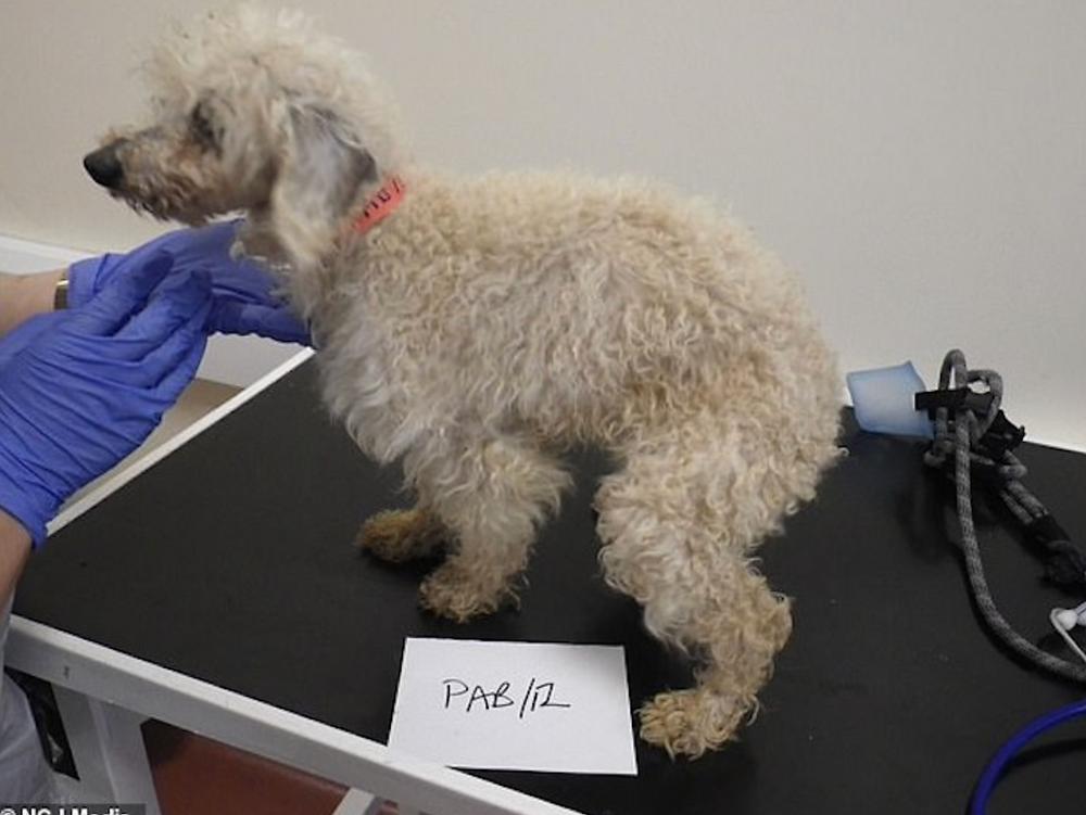 Собаку содержали в клетке