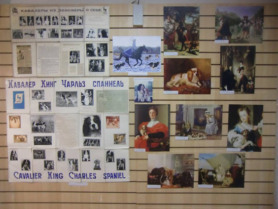 Экспозиция о Кавалерах в Музее Собаки