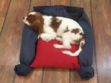 Почему щенок писает на свой лежак?