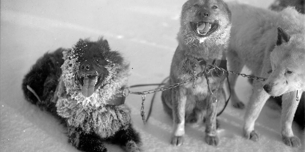 """Онлайн экскурсия """"Собаки на Севере"""" - запись"""