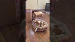 Приданное для щенка