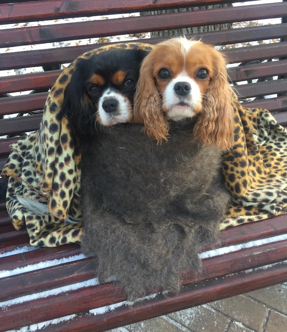 Сильвия и Бэллочка на фото-сессии у Елены Ти