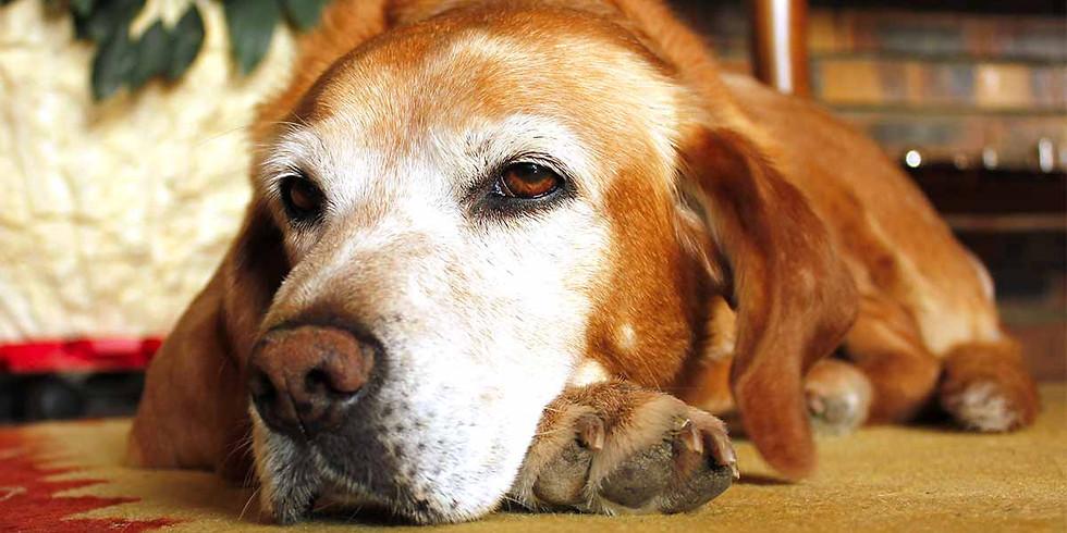 Лекция Юлии Соколовой. Старость в радость. Старение собаки, возможные проблемы.