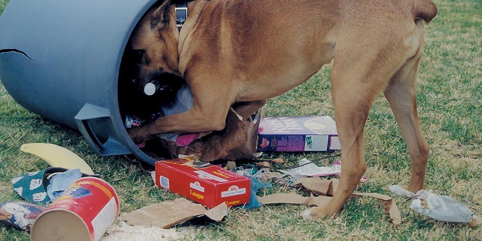 Лекция Юлии Соколовой. Съедобное - несъедобное. Почему собаки едят несъедобные вещи? Как отучить от вредной привычки?