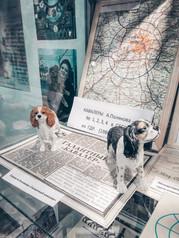 Карта ГДР в витрине Музея Собаки